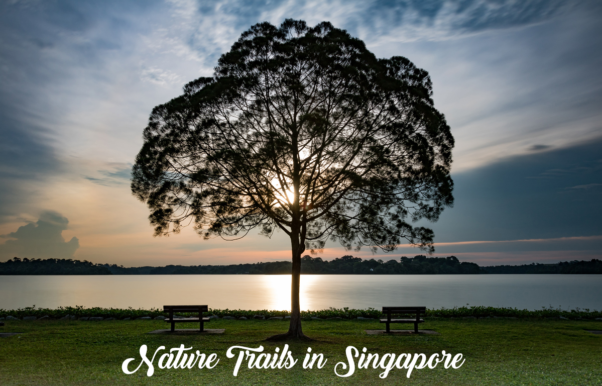 Nature Trails In Singapore